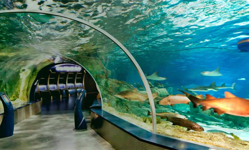 aquariums-in-istanbul-min